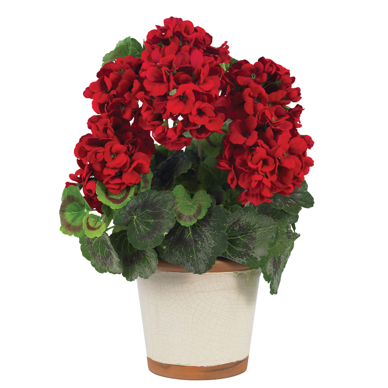 Комнатные цветы в вазоне