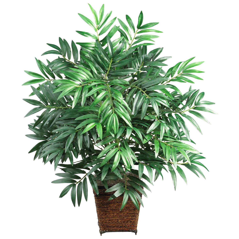 Бамбуковая пальма уход в домашних условиях фото 828